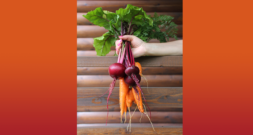 The Sustainable Garden: Grow Your Own Food Using Kitchen Scraps